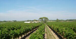 Rượu vang pháp Chateau Laroche Joubert